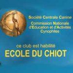 Ecole-du-chiot