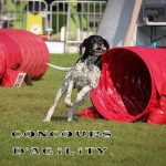 concours agility thumb